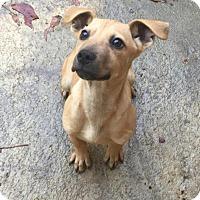 Adopt A Pet :: Ramsey - Charlotte, NC