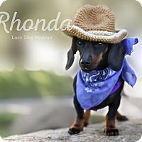 Adopt A Pet :: Rhonda - Valley Center, CA