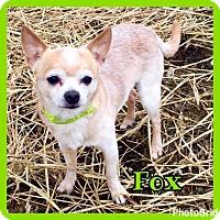 Adopt A Pet :: Fox - Jasper, IN