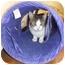 Photo 2 - Domestic Shorthair Cat for adoption in Lake Charles, Louisiana - Wemberly