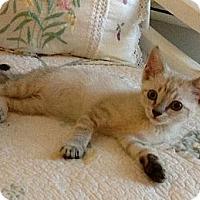 Adopt A Pet :: Sukiyaki - Vero Beach, FL
