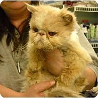 Adopt A Pet :: Punkin - Columbus, OH