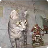 Adopt A Pet :: Polly - Catasauqua, PA