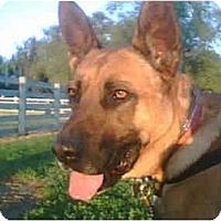 Adopt A Pet :: Kyle - Lodi, CA