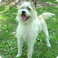 Adopt A Pet :: Pear - Mocksville, NC