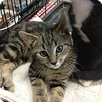 Adopt A Pet :: Clyde - Pittstown, NJ