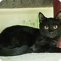 Adopt A Pet :: Persia - Shelton, WA