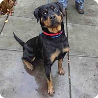 Adopt A Pet :: Yula - Tracy, CA