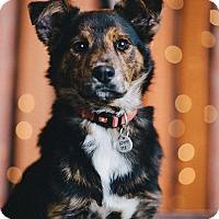 Adopt A Pet :: Mr Petey - Portland, OR