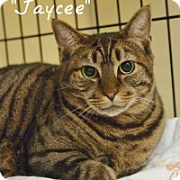 Adopt A Pet :: Jaycee - Ocean City, NJ