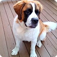 Adopt A Pet :: Everly - Denver, CO