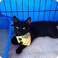 Adopt A Pet :: Kenzie - Horsham, PA