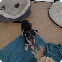 Adopt A Pet :: Barkley - Simi Valley, CA