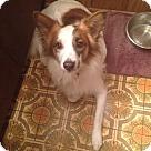 Adopt A Pet :: Naudia - Sherman, CT