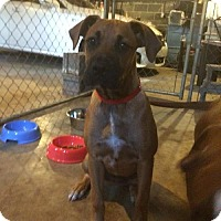 Adopt A Pet :: Amy Lou - Brentwood, TN