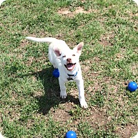 Adopt A Pet :: Ernie - Woodward, OK