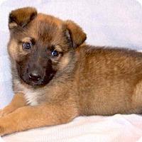 Adopt A Pet :: 16-d05-005 Florence - Fayetteville, TN