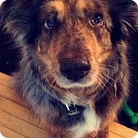 Adopt A Pet :: Phoebe - Elk River, MN