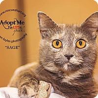 Adopt A Pet :: Sage - Cincinnati, OH
