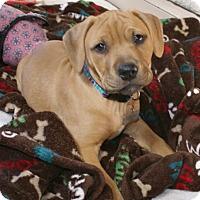 Adopt A Pet :: Finn - Framingham, MA