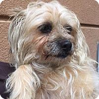 Adopt A Pet :: Ruby - Westminster, CA