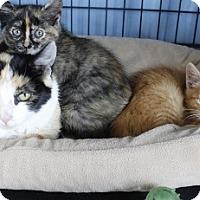 Adopt A Pet :: Roxanna & Ramsey - Polson, MT
