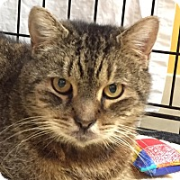 Adopt A Pet :: Sniffles - Norwalk, CT