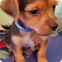 Adopt A Pet :: Huck - Spring, TX