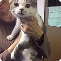 Adopt A Pet :: Katie Ledecky - Washington, DC