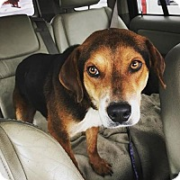 Adopt A Pet :: Clyde - Nesquehoning, PA