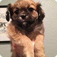 Adopt A Pet :: Papaya - San Diego, CA