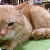 Adopt A Pet :: Jackson - Columbus, OH