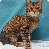 Adopt A Pet :: May - Colorado Springs, CO