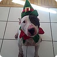 Adopt A Pet :: McFly - Manassas, VA