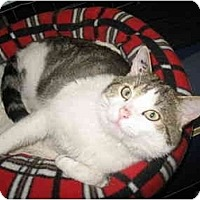 Adopt A Pet :: Whitespot - Mission, BC