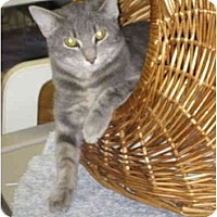 Adopt A Pet :: Daisy - Lombard, IL
