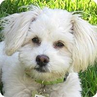 Adopt A Pet :: Pippi - La Costa, CA
