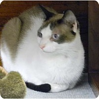 Adopt A Pet :: Felix - Bonita Springs, FL