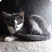 Adopt A Pet :: Samantha - Colmar, PA