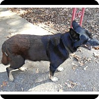 German Shepherd Dog Dog for adoption in Madison, Alabama - MAX