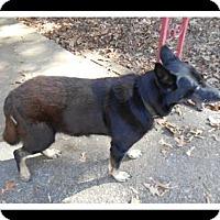 Adopt A Pet :: MAX - Madison, AL