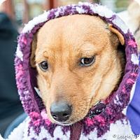 Adopt A Pet :: Juliette - San Marcos, CA