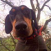 Adopt A Pet :: Max - Clayton, CA