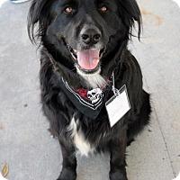 Adopt A Pet :: Nanook - San Diego, CA