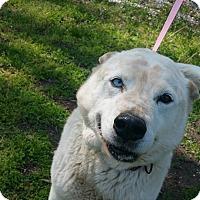 Adopt A Pet :: UNDER DOG FAT BOY - Marion, IN