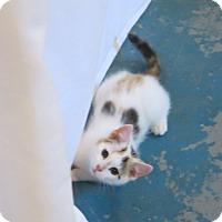 Adopt A Pet :: Jodie - Geneseo, IL
