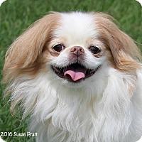 Adopt A Pet :: Mason - Bedford, VA
