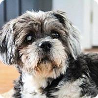 Adopt A Pet :: Muffin - Greensboro, MD