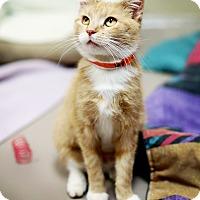 Adopt A Pet :: Boa - Appleton, WI