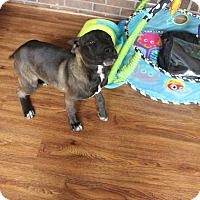 Adopt A Pet :: Roscoe - Greenville, NC